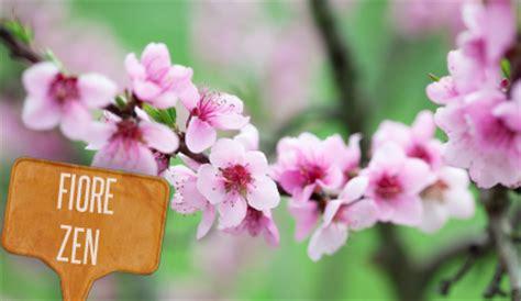 fiore pesco linguaggio dei fiori fiori rosa fiori di pesco e fiori