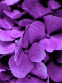 the best purple flowers for your garden dark purple