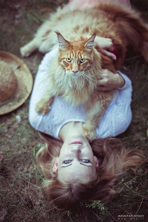 huge maine coon cats     kitty  tiny top