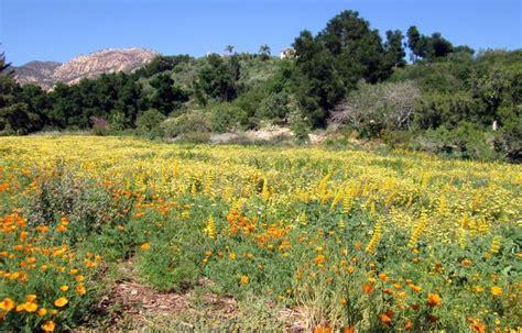 Southern California Botanical Gardens 17 Beautiful Southern California Botanical Gardens
