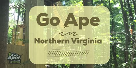 Detox Northern Va by Go Ape In Northern Virginia All The Map