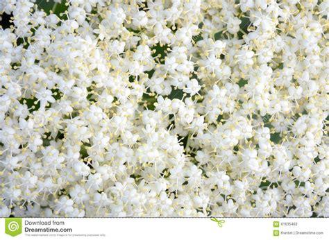 fiori bianchi piccoli piccoli fiori bianchi fondo fotografia stock