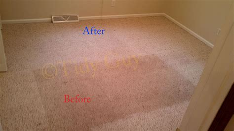 albemarle carpet and upholstery carpet cleaning charlottesville