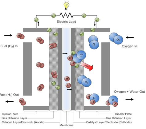 Proton Exchange Membrane Fuel Cell by Science Is Basic Diagram Of A Pemfc Proton