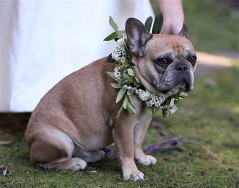 epic film dog epic love story wedding film by grover films bridal musings