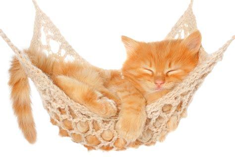 Kitten In Hammock cat hammock 16 pictures cat dompict