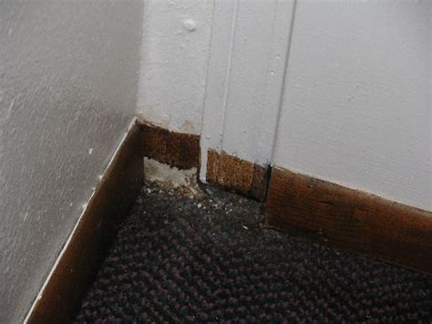 how to stop mold in bedroom mould and mildew on bedroom walls picture of the park mold