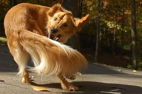 Puppytails On His Way by The Tale Of A S My