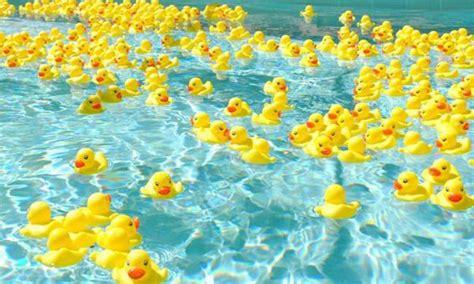 rubber st events rubber ducky regatta visit st augustine