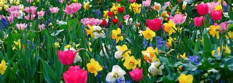 fiori riccione romagna fiori vendita all ingrosso fiori