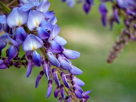 i fiori di giugno fiori di giugno fiori per cerimonie fiori di giugno