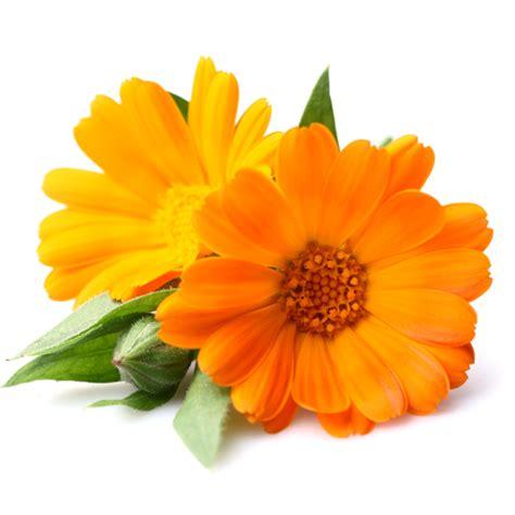 fiore di calendula miele limone