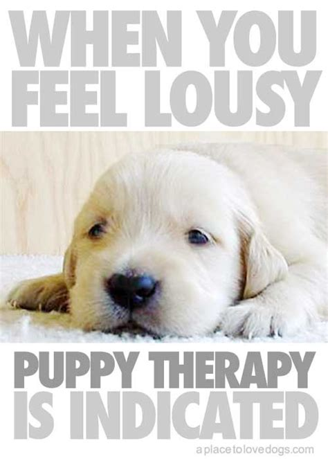 quotes  therapy dogs quotesgram
