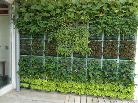 Creare Un Giardino Sul Balcone by Come Creare Un Mini Orto Sul Balcone Con Le Piante Nane