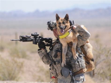 combat dogs wyden bill seeks to bring combat dogs home rallypoint