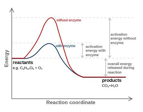 energy reaction coordinate diagram reaction coordinate