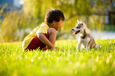 dogs and humans the bond between dogs and humans learning from dogs