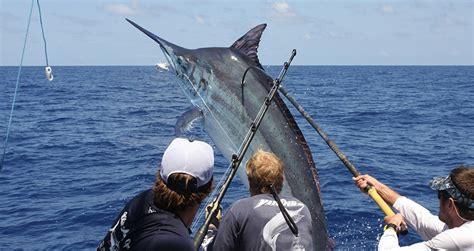 australian sport fishing boats marlin fishing cairns australia australian marlin charters