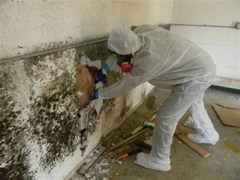 what s the most effective way to remove mildew smells