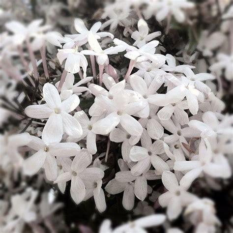 Madu Bihophar Summer Flower 73 best images about on flower tattoos purple necklace and flower