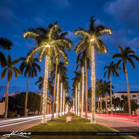 royal palm tree christmas lights palm beach island by