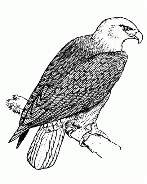 eagle wings coloring page eagles wings art coloring pages