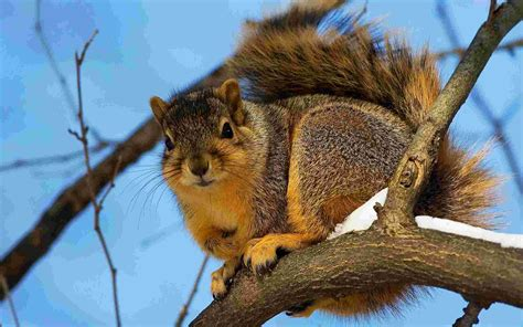 bing pictures as wallpaper squirrel big squirrel wallpaper unsorted other wallpaper