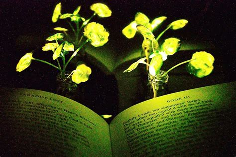 glowing green lights in trees mit engineers just unveiled living glowing plants