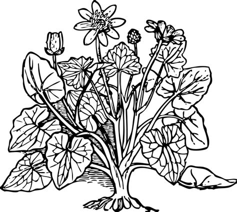 coloring pictures of flowers and trees plants for coloring www mindsandvines