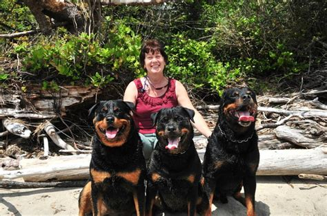 are rottweilers rottweiler with www pixshark images galleries with a bite