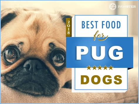 pug puppy diet 6 best foods to feed your and puppy pug in 2018