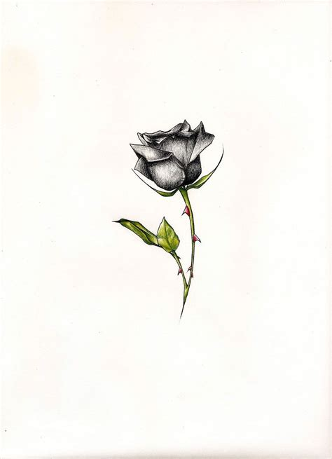 black rose tattoo design black pictures