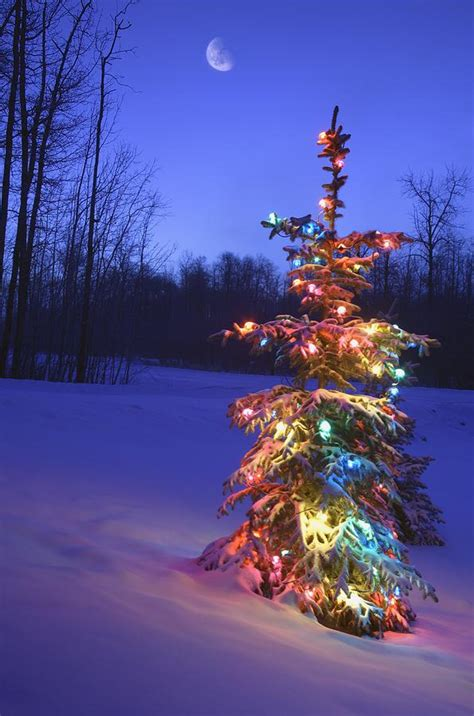 christmas tree outdoors under moonlight photograph by
