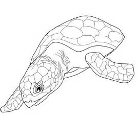 sea turtle coloring page free printable turtle coloring pages for