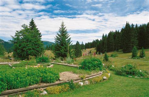 giardino botanico giardino botanico di passo coe trentino