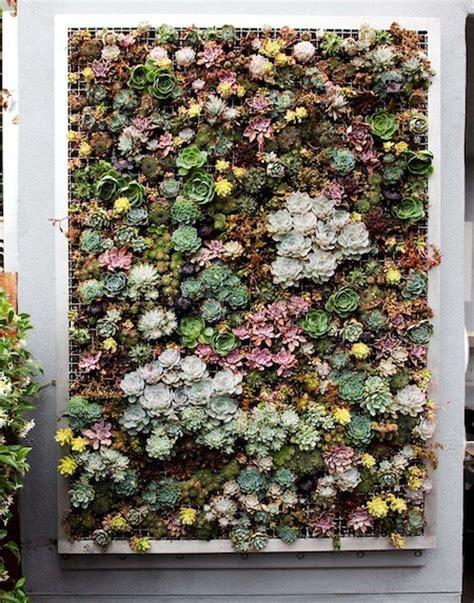 planting a stunning succulent garden aphrochic modern