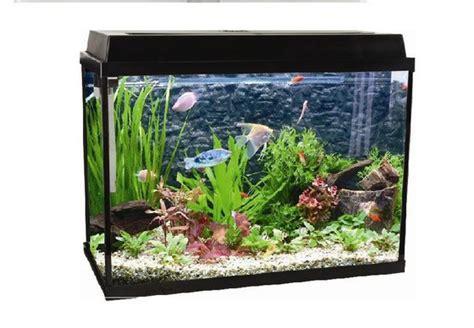 Aquarium Fish Model Cumi 13 Liter 60l glass fish aquariums id 6454257 product details