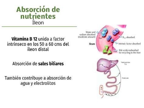 sindrome intestino corto s 237 ndrome de intestino corto