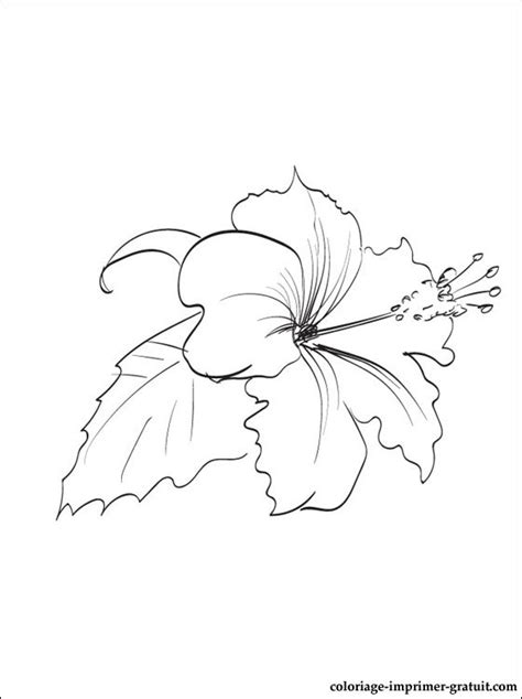 Pin Coloriage-hibiscus-coloriages-fleurs on Pinterest