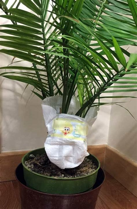 put  baby plants  diapers gardening home decor