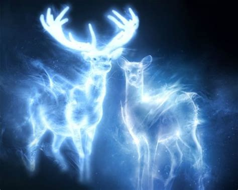 doe and stag patronus snape and potter same