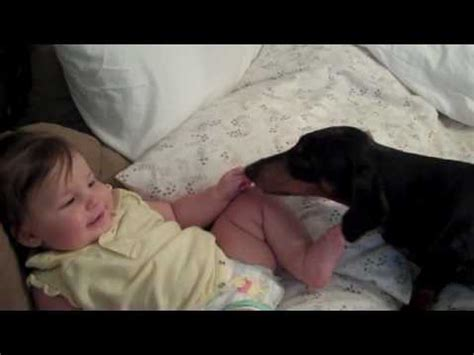 baby in bathtub laughing at dog dachshund playing with giggling baby doovi