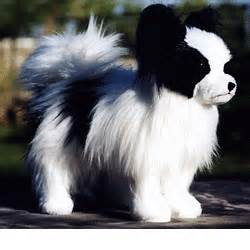 stuffed papillon from kathy s kreations