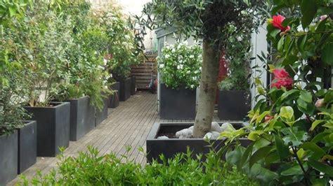 piante vaso piante vaso piante da terrazzo coltivare piante in vaso
