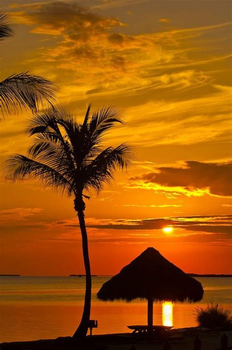 images  tropical scenery  pinterest palm