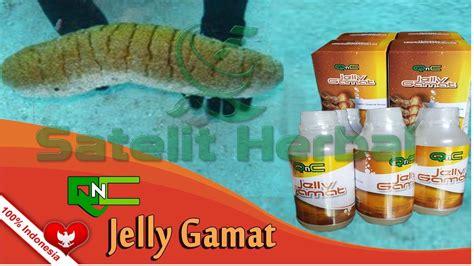 Obat Herbal Qnc Jelly Gamat qnc jelly gamat asli dan murah klinik pengobatan herbal