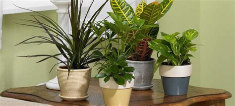 Houseplants by Care For Houseplants