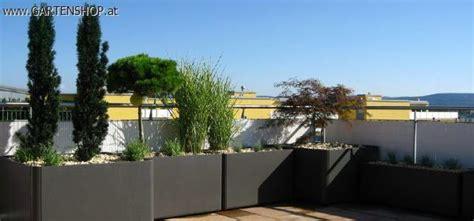 Garten Sichtschutz Pflanzen 172 by Blumentr 246 Ge Garten Sichtschutz Haus Und