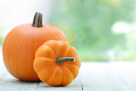 pumpkin facts facts about pumpkins nutrition and information