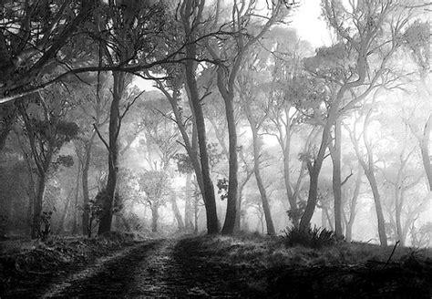 white black forest black white forest flickr photo